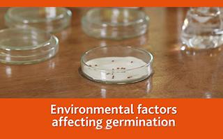 Environmental factors affecting germination