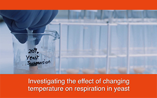 Investigating the effect of changing temperature on respiration in yeast