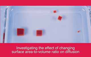 Investigating the effect of changing surface area-to-volume ratio on diffusion